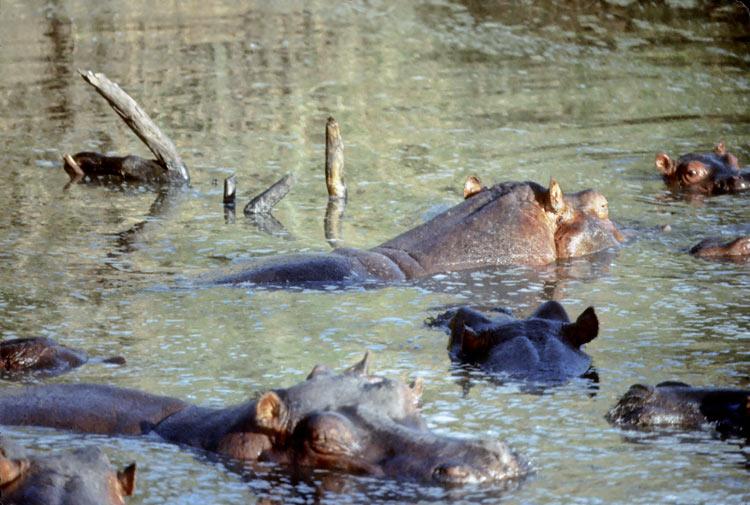 Kenya: animals